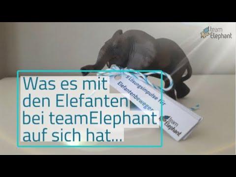Von Elefanten und dem Umgang mit Konflikten und Widerständen bei teamElephant